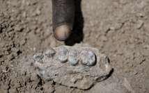 كشف حفريات في اثيوبيا يضيف افرادا جددا للجنس البشري (رويترز)