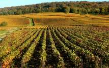 The historic vineyards, wine cellars and champagne houses of France's Champagne region are listed as a world heritage site by UNESCO ( Francois Nascimbeni (AFP/File) )