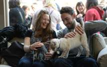"""Visitors play with cats at the pop-up """"Cat cafe"""", a cafe where patrons can interact with and adopt cats, in New York, April 25, 2014 ( Emmanuel Dunand (AFP) )"""