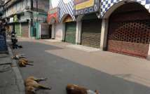 Stray dogs sleep on an empty road during a one day general strike called by the trade unions in Siliguri on February 28, 2012 ( AFP )