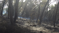 credits/photos : Scorched forest near Neve Shalom smolders as fire fighters work to put out a blaze on November 22, 2016