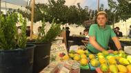 """crédits/photos : Il est prescrit dans la Torah de prendre le premier jour de Souccot quatre espèces, """"du fruit de l'arbre hadar, des branches de palmier, des rameaux de l'arbre-avoth et des saules de rivière"""""""