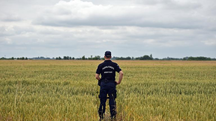 Serbian border police officer inspects a path trough a wheat field near the Hungarian border near the northern Serbian city of Subotica on June 16, 2015