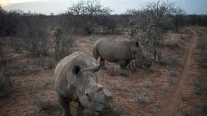 Military veterans seek new role in S.Africa poaching war