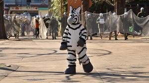 Tokyo zoo stages 'zebra escape'
