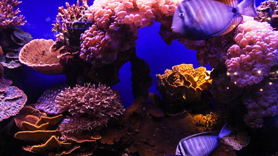 Local marine life disappearing from Israeli shores at alarming rates