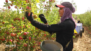 Between change and rebirth, today's kibbutzim