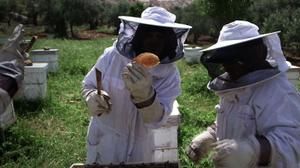Honey provides sweet relief for Palestinian women