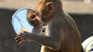 Gel alternative to vasectomy works in monkeys: study