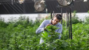 Israeli University opens country's first course on use of medical cannabis