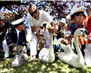 The Queen's Swan Marker David Barber (R) and other swan uppers inspect a swan during the annual Swan Upping ceremony on the River Thames between Shepperton and Windsor in southern England on Monday. Young cygnets are counted and swans and cygnets are asse ( Reuters )