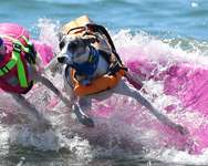 Surfing dogs ( FREDERIC J. BROWN/AFP )