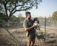 Johan de Beers, kennel master of the Kruger National Park Anti-Poaching K9 Unit, holds Gladys, a Springer Spaniel trained to sniff out firearms and ammunition on June 23, 2015 ( Stefan Heunis (AFP) )