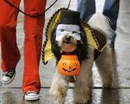 Halloween ( AFP )