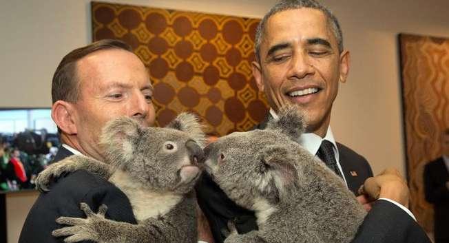 Australian Prime Minister Tony Abbott (L) and US President Barack Obama hold Koalas before the start of the first G20 meeting in Brisbane on November 15, 2014 ( Andrew Taylor (G20 AUSTRALIA/AFP) )