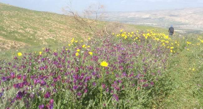 Jordan Valley, Spring 2015 ( Maya Margit )