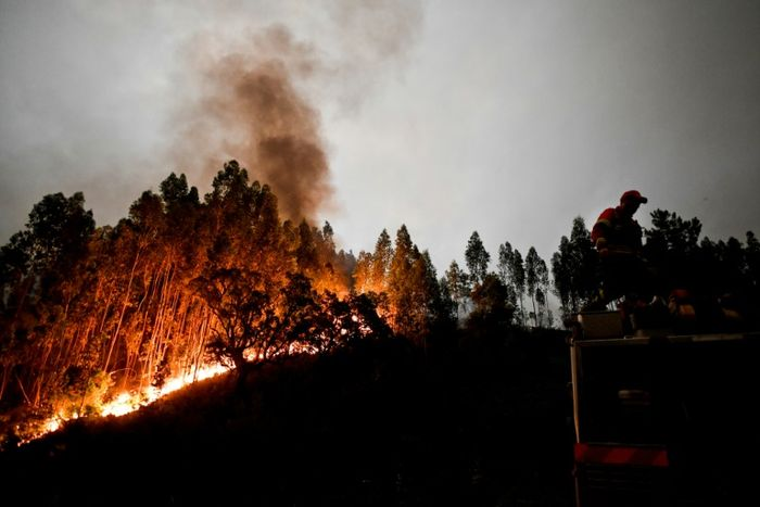 PATRICIA DE MELO MOREIRA (AFP)