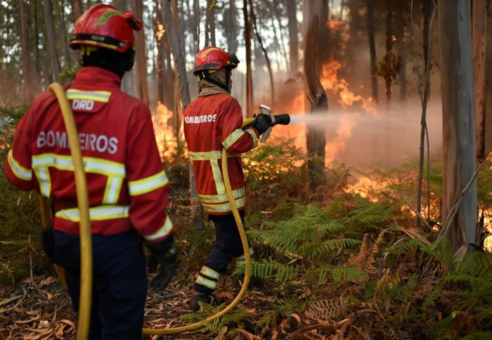 Spain offers help to Portugal for forest fires