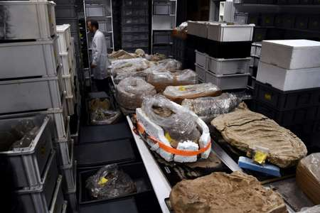 Unlocking the mysteries of the ancient cold case through a raft of high-tech tests is likely to take up to seven years. ( AFP )