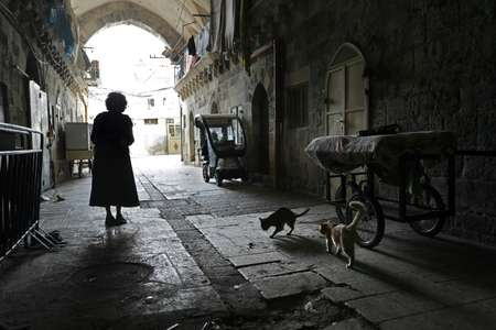 For more than two decades Tova Saul has fed and cared for hundreds of cats, earning the informal title of the walled Old City's 'cat lady'.  ( THOMAS COEX (AFP) )