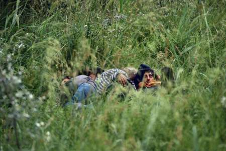 A group of illegal immigrants rests in high grass near an abandoned brick factory near the northern Serbian city of Subotica on June 16, 2015 ( Andrej Isakovic (AFP) )