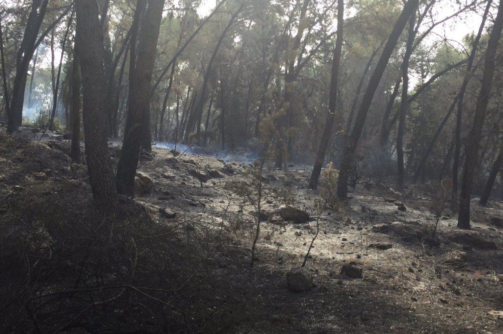 Scorched forest near Neve Shalom smolders as fire fighters work to put out a blaze on November 22, 2016