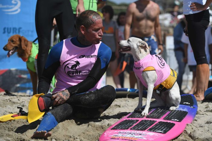 Surf dog Sugar, a Collie mix, and owner Ryan Ruston took part in the competition.