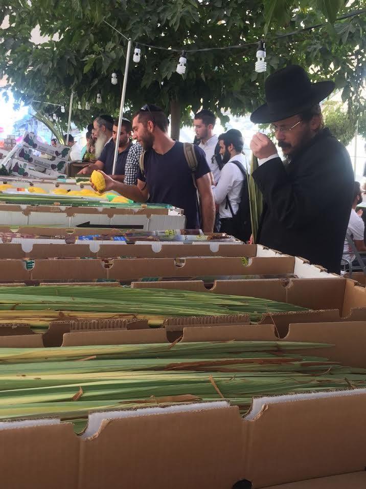 L'etrog (cédrat), au loulav (palme de dattier), au hadass (branche de myrte) et à l'arava (branche de saule) font partie de la tradition rabbinique