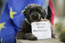 Hundreds of dogs hound May for 'Wooferendum' on Brexit