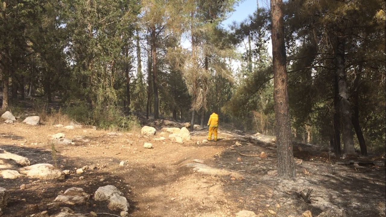 A firefighter surveys the forest near a wildfire burning close to Neve Shalom on November 22, 2016