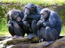 Israeli teachers discouraged from teaching evolution: report