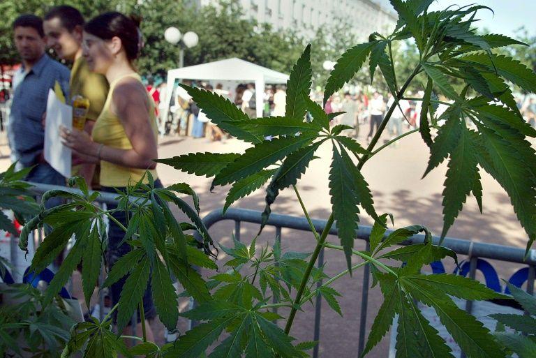 Israël se dirige vers la dépénalisation du cannabis