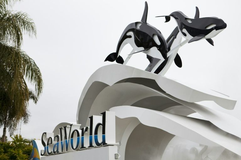 A Chinese firm has bought a 21 per cent stake in SeaWorld Entertainment, whose shows featuring killer whales have been slammed by animal rights groups