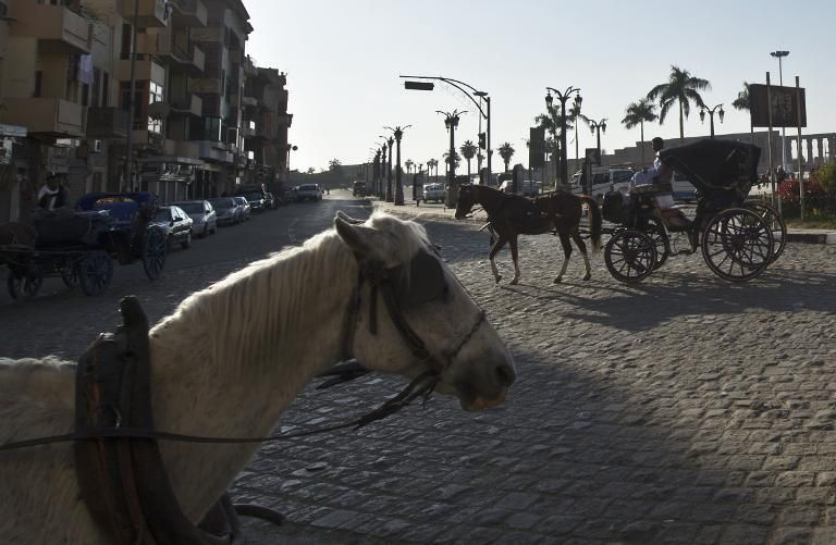 Egyptian men on their horse carts wait for tourists in the southern Egyptian city of Luxor, on December 21, 2013