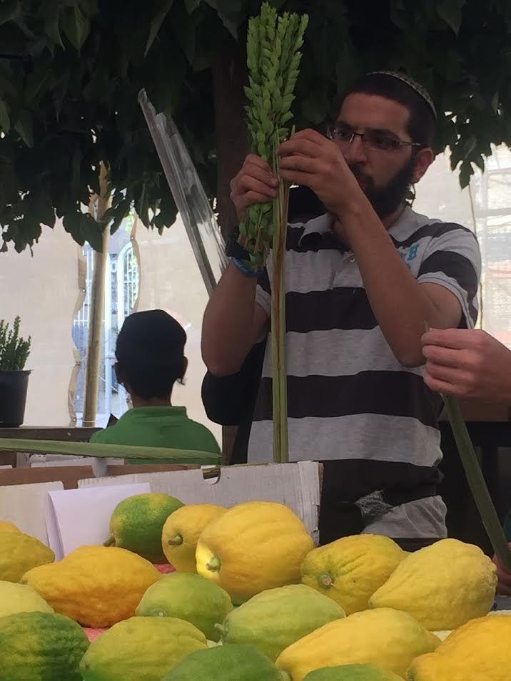 """Il est prescrit dans la Torah de prendre le premier jour de Souccot quatre espèces, """"du fruit de l'arbre hadar, des branches de palmier, des rameaux de l'arbre-avoth et des saules de rivière"""""""