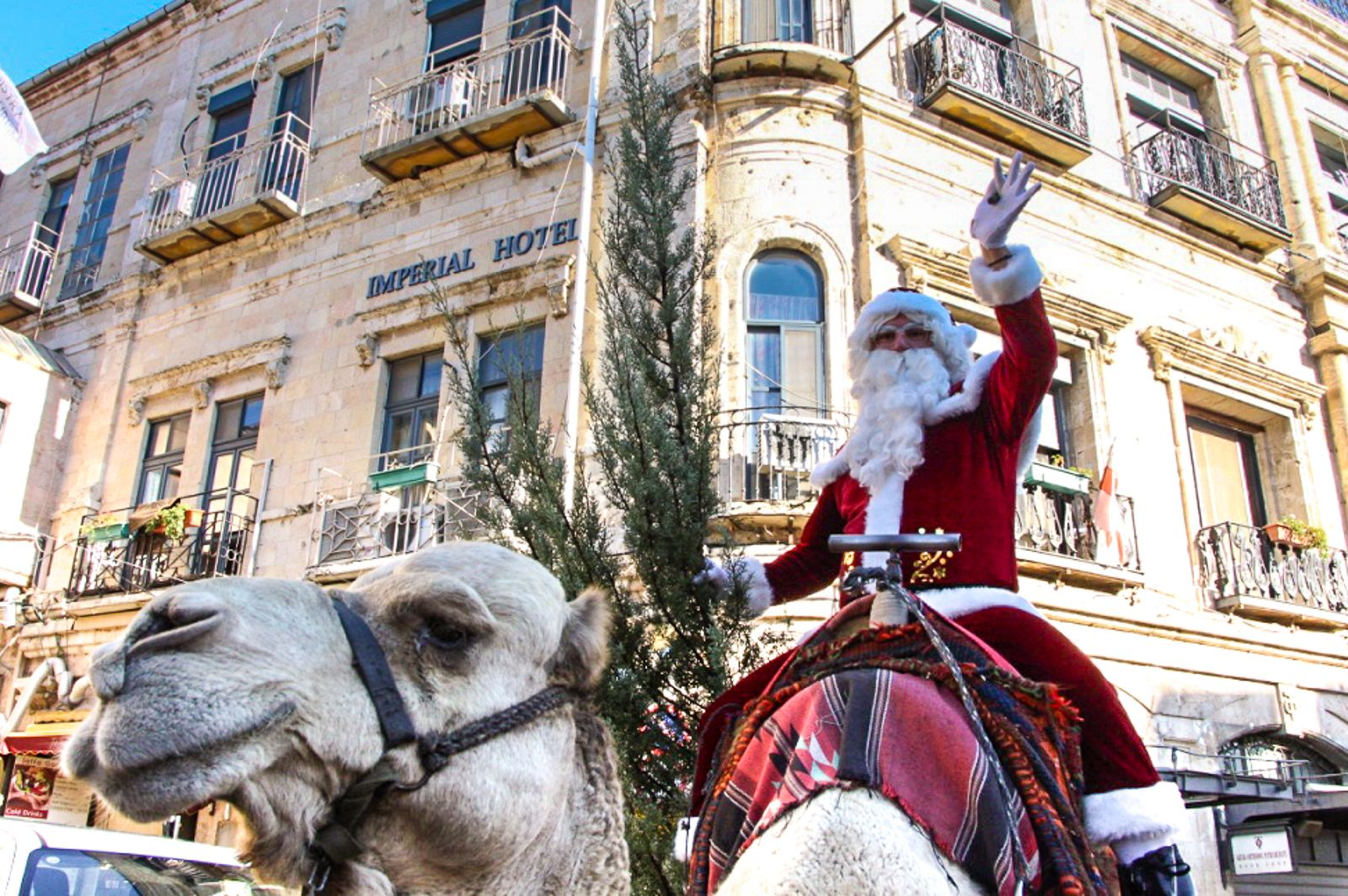 Santa Claus and his trusty camel help distribute free Christmas trees in Jerusalem's Old City on December 20, 2016